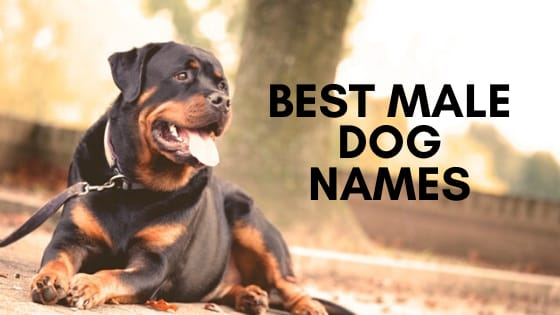 Top 500 Best Male Dog Names Updated 2020